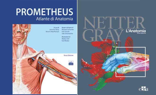 Anatomia: Su quali libri studiare per preparare l'esame?