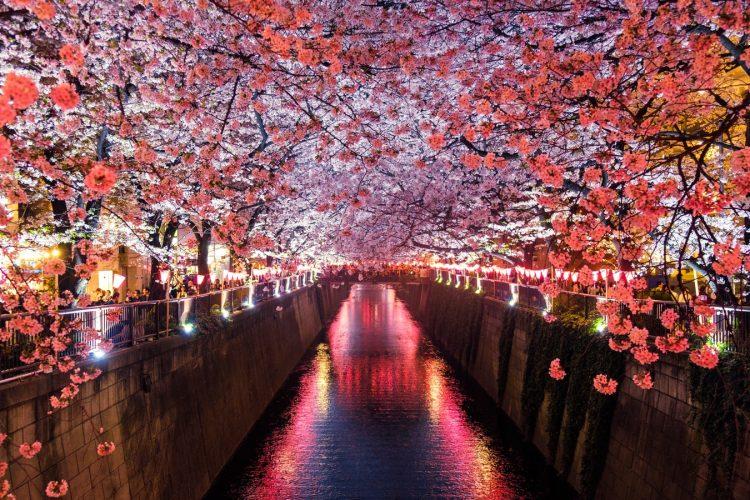 Studiare giapponese: quali libri usare?